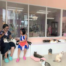 超過一百隻貓的貓cafe, 貓貓全也是拯救回來!  並且歡迎小朋友來店!
